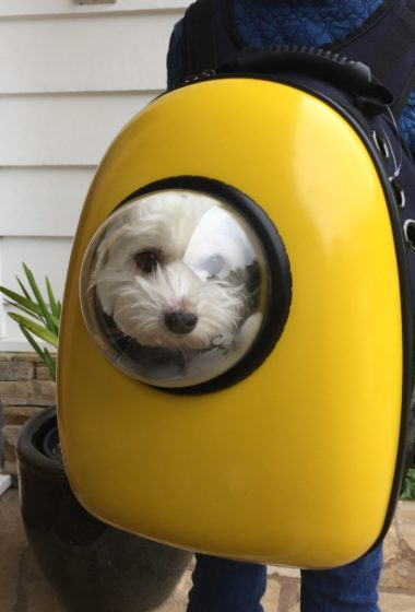 A Walk With a View: U-Pet Bubble Window Pet Backpack